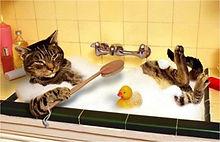 wassen kat.jpg