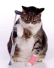 Wondverzorging kat.jpg