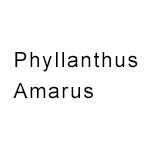 Phyllanthus-Amarus