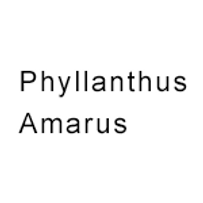 Phyllanthus-Amarus.png
