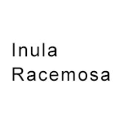 Inula-Racemosa