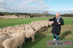 Chee at Curringa Sheep farm