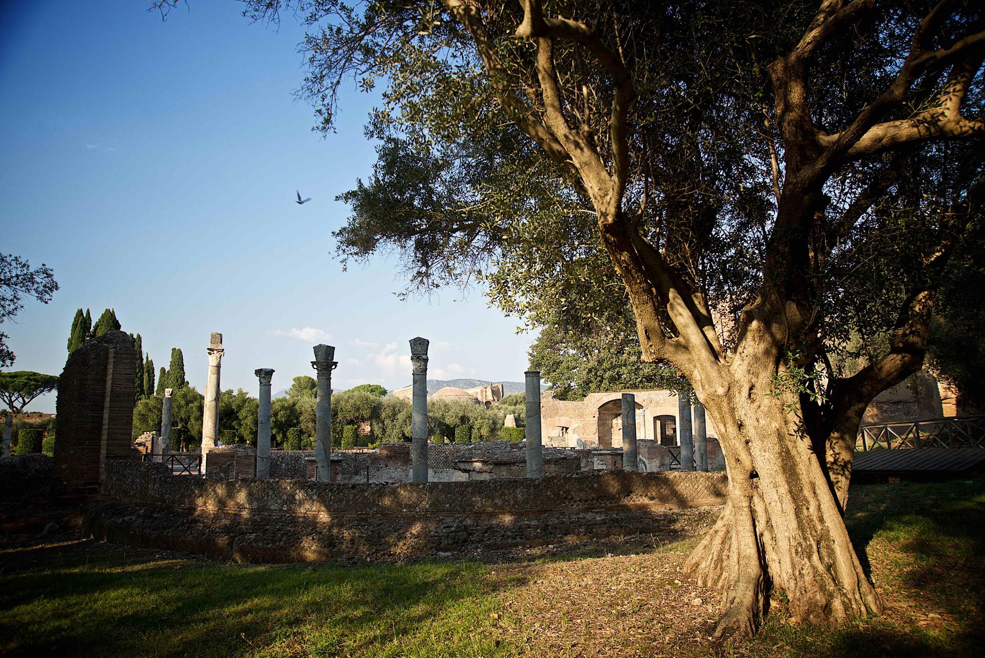 Villa Adriana, Ruins and Olive Tree