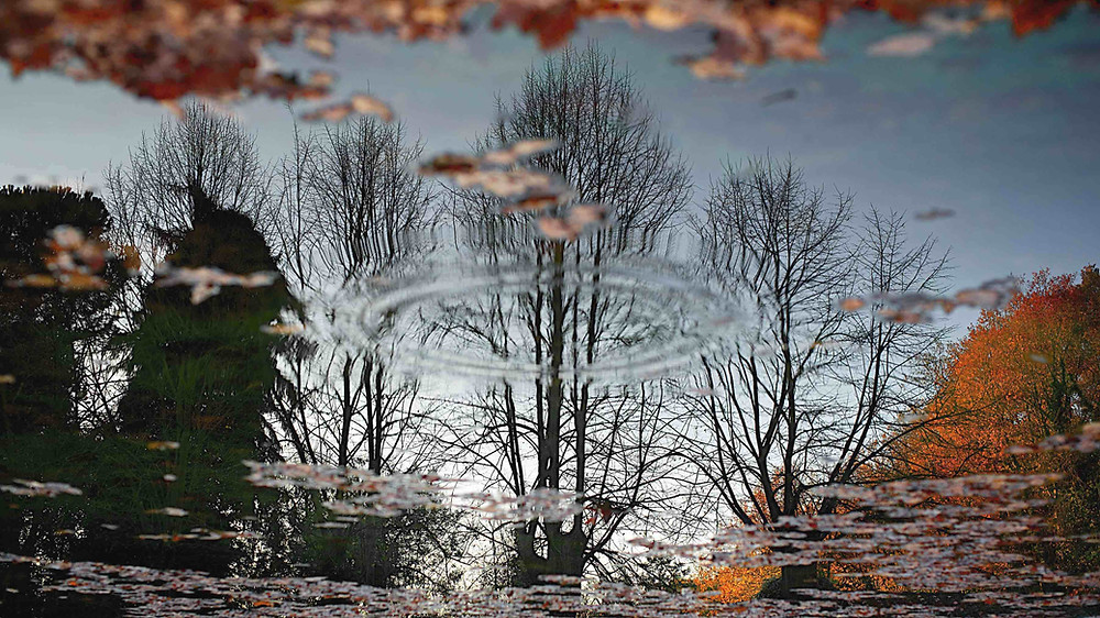 Reflections of trees on water. Magic and beauty captured on a Villa Borghese and posh areas tour, with Giulio D'Ercole, Rome Photo Fun Tours