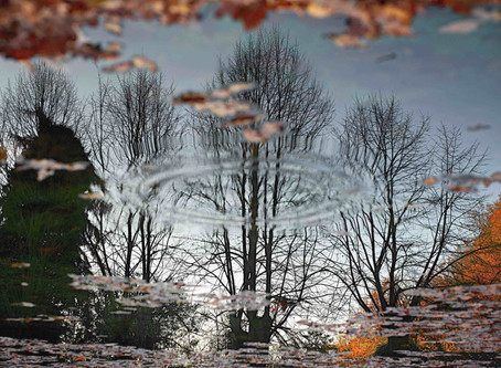8.	Water, trees and leaves: