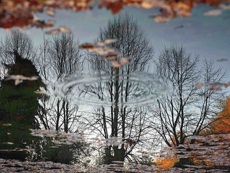 8.Water, trees and leaves: