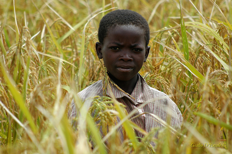 Boy in wheat  field, Tanzania copy.jpg