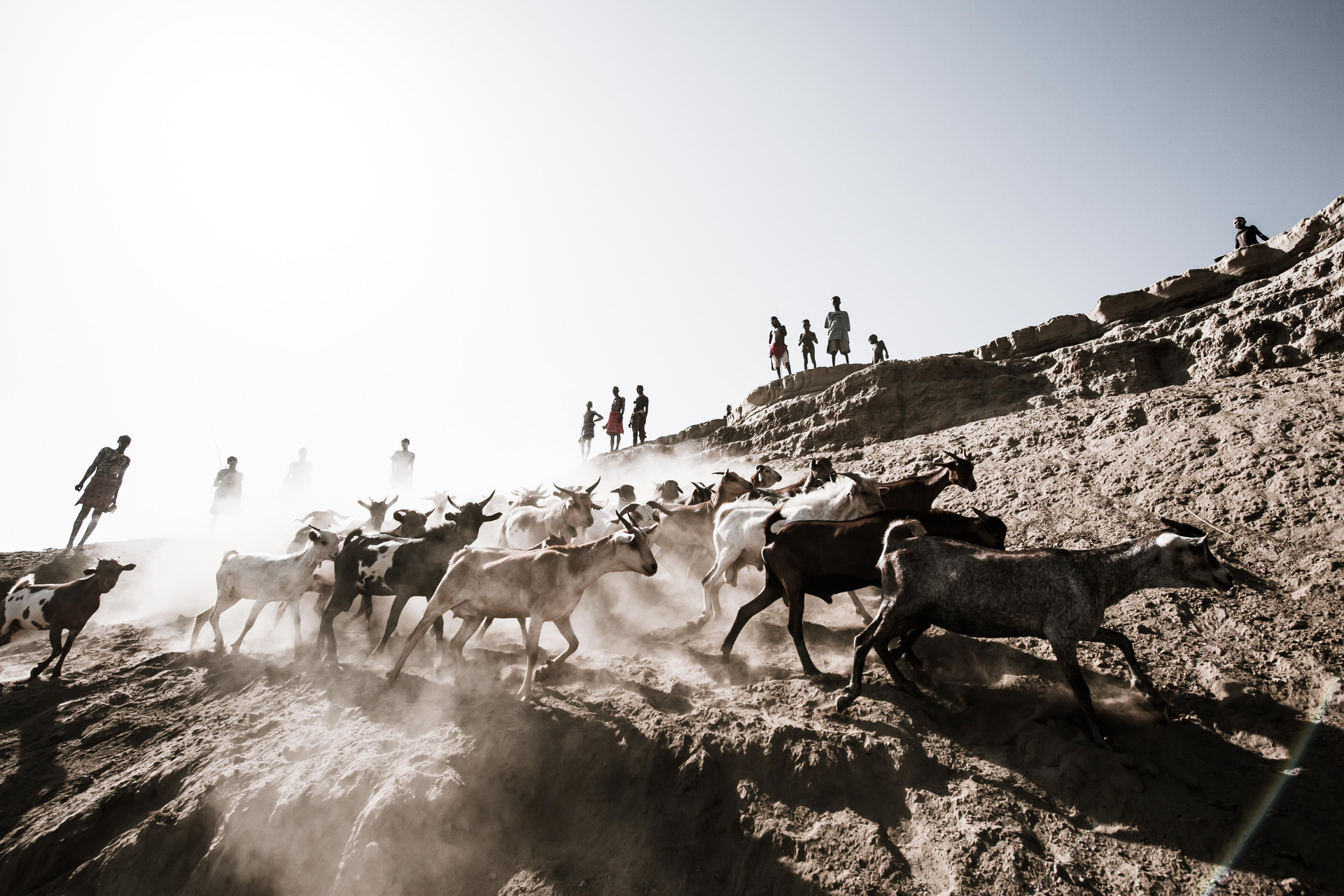 2. Pastoralist's Life.jpg