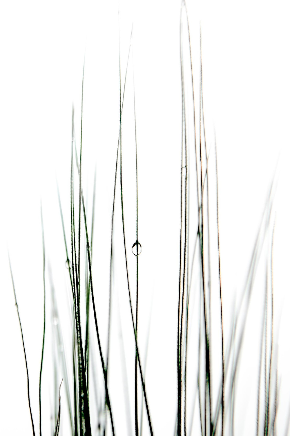 A water drop holding its balance on a thin blade of grass. Photo by Giulio D'Ercole, Rome Photo Fun Tours.