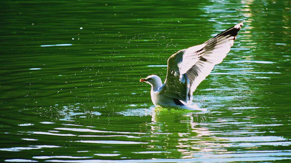 A seagull enjoying Villa Borghese