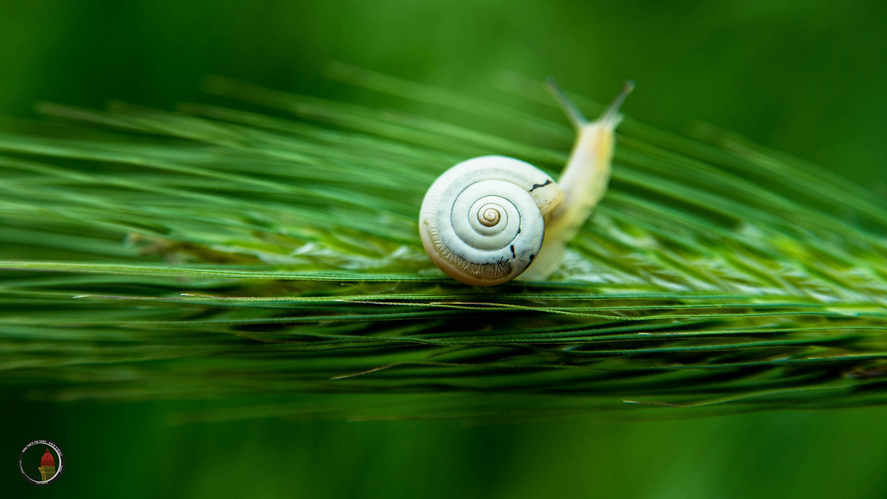 Macrophotography, photographing the small to see the bigger picture. Photo by Giulio D'Ercole, Rome Photo Fun Tours