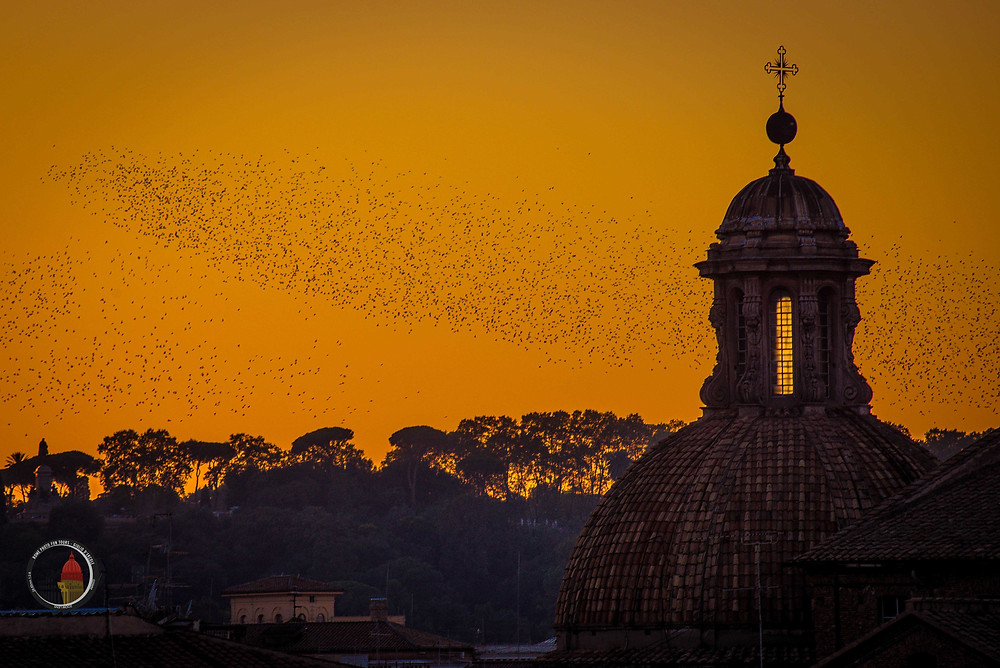 Come to capture the magical sunsets of Rome during Giulio D'Ercole's informative Rome Photo Fun Tours hands-on workshops