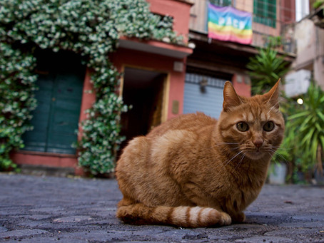 46. The Aristo(Roman)cat.