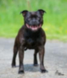Photoshoot dogs Vikstranda (34 of 109).j