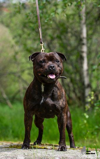Photoshoot dogs Vikstranda (64 of 109).j