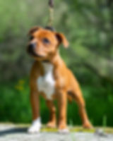 Photoshoot dogs Vikstranda (52 of 109).j