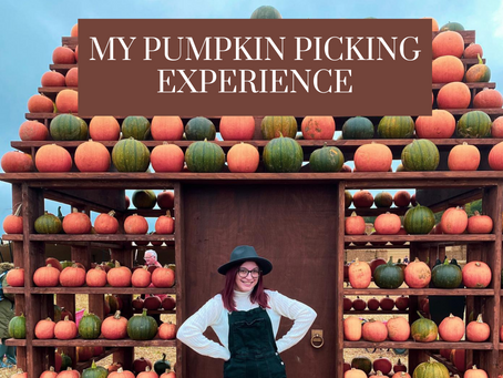 My Pumpkin Picking Experience
