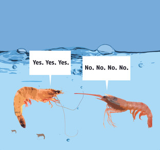 Talking Shrimps.jpg