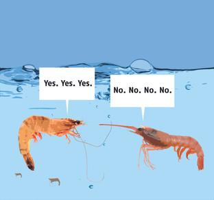 Talking Shrimps.jpg