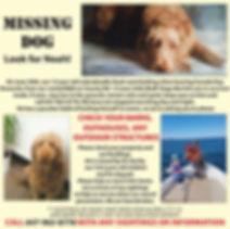 Missing-Dog.jpg
