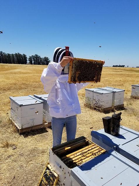 Hive assessment.jpg