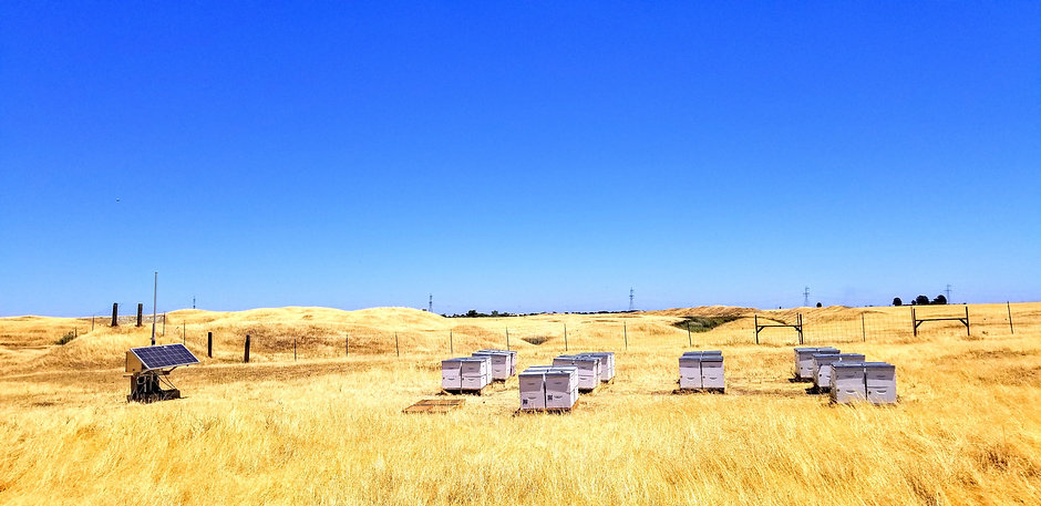 Hives Ubees.jpg