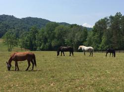Horses of Last Chance Farm