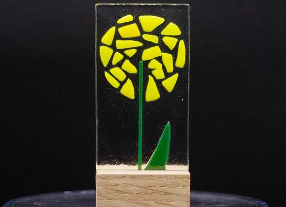 Yellow Allium.