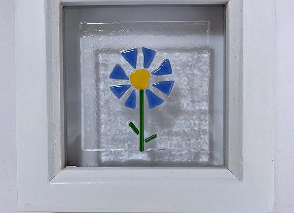 Blue Daisy.