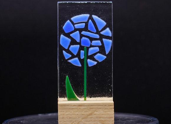 Blue Allium.