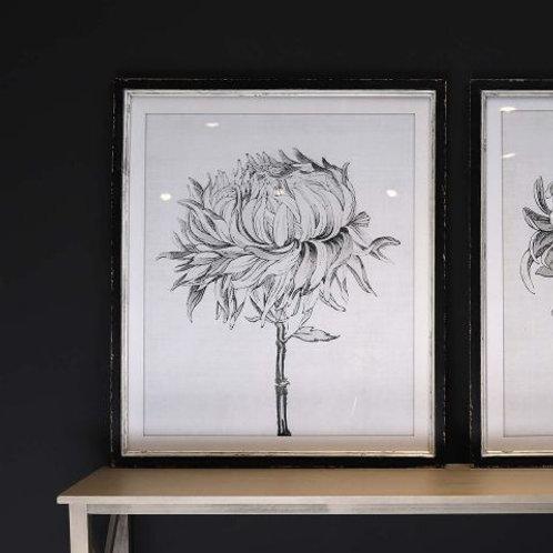 Sketched Floral Picture in Distressed Black Wooden Frame (I)