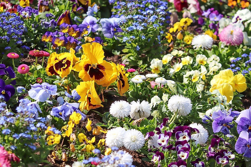 spring-flowers-4158513_1280.jpg