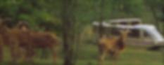 safari1400x560_3.png