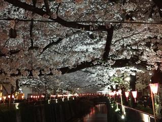 夜桜~中目黒~