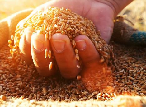 Si terrà a febbraio Sustainable Food 2019