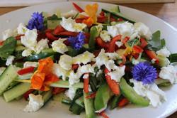 Pepper & Cucumber Salad