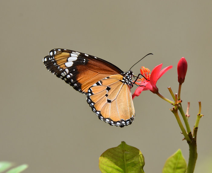 monarch%2520butterfly%2520perched%2520on