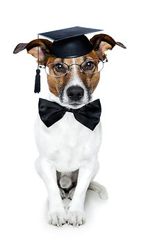 photodune-1746994-graduate-dog-m.jpg
