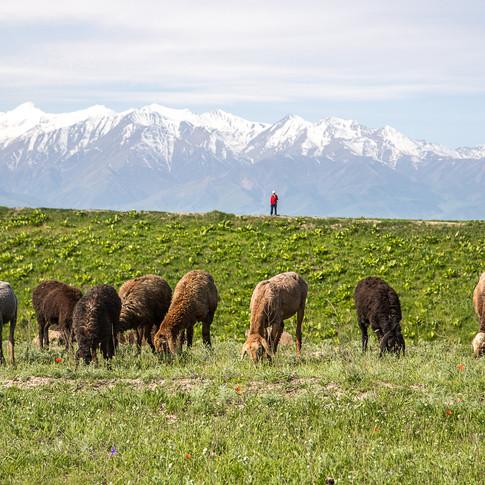 Предгорья Киргизского хребта