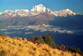 ghorepani-poon-hill-trek71.jpeg