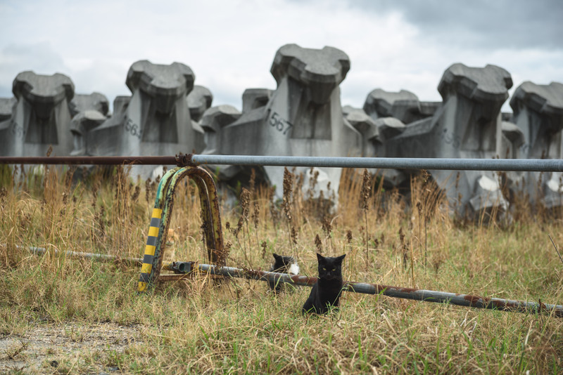 Cats and Concrete Blocks