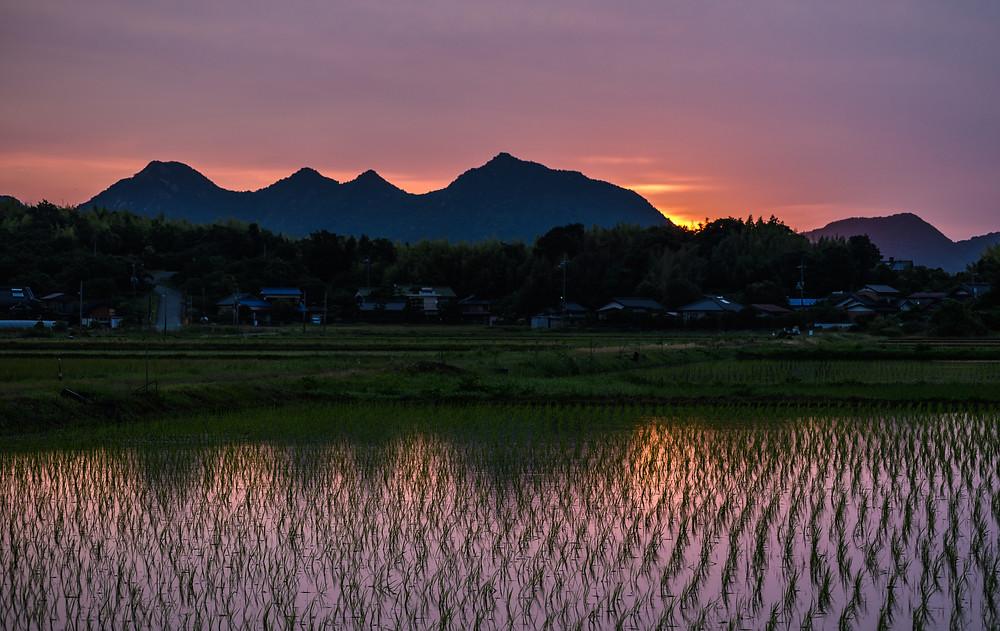 農村の夜明け / A farming village at dawn