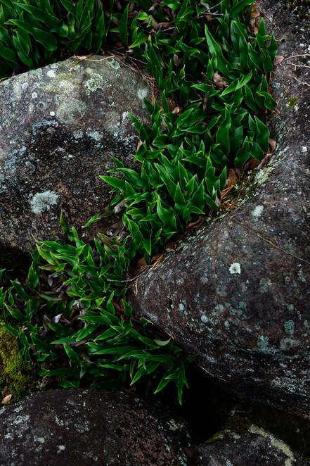 Plant between Rocks