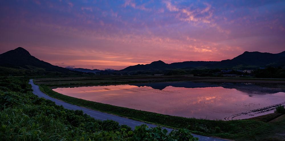水田に反射する朝焼け / Sunrise glow reflecting on a paddy field