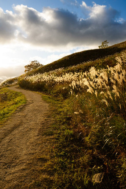Path to Hilltop