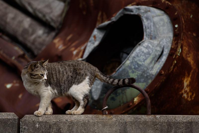 Cat and Scrap Metals
