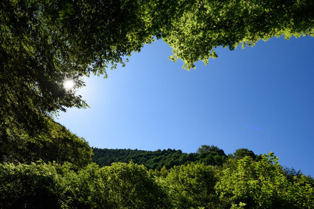 山道から空を見上げる / Looking up at the sky from the mountain path