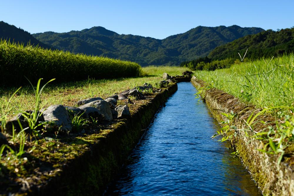 田んぼと水路 / Rice Paddies and Waterways