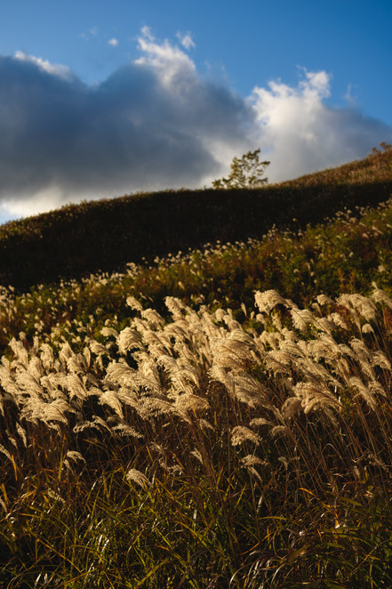Hill and Pampas Grass
