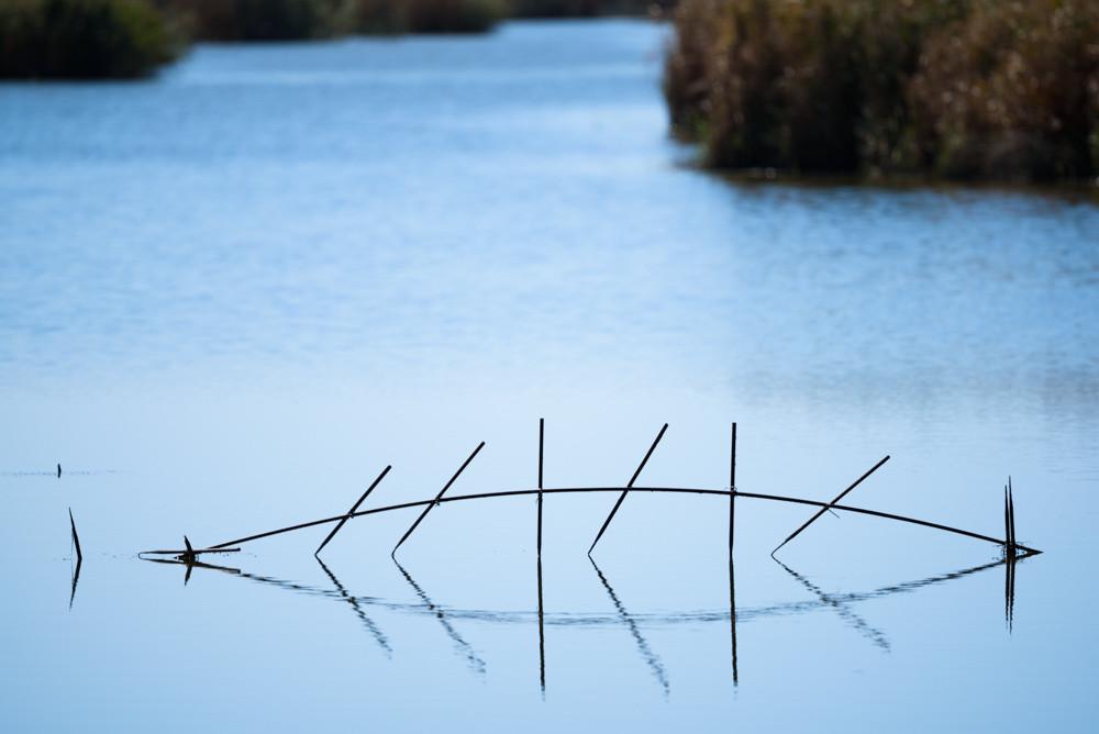 魚のような水面の反射 / Reflections on the water surface like a fish